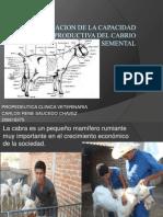EVALUACION DE LA CAPACIDAD REPRODUCTIVA DEL SEMENTAL.pptx