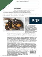 A la caza de la 'avispa asesina' _ Cataluña _ EL PAÍS