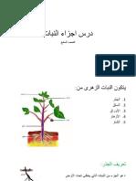 درس اجزاء النبات