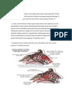 Patofisiologi epistaksis