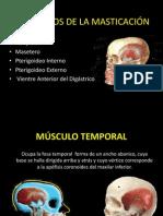 4.-MUSCULOS DE LA MASTICACIÓN