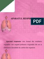 Anatomia aparatului respirator.ppt