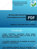 Metabolismo - mergulho