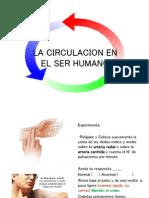 La Circulacion en El Humano