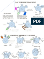 6. B and T-Cell Development (Reuploaded)