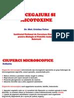 Mucegaiuri Si Micotoxine (1)