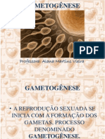 7aula-gametognese-130526082639-phpapp02