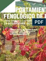 Comportamiento fenológico de la vid (vitis vinífera l.) cv cabernet sauvignon en Sutamarchán – Boyacá