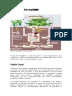 ciclodonitrognio-090504192852-phpapp02