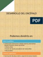 DESARROLLO DEL ENCÉFALO COMPLETO