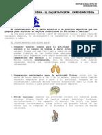 1_El_Calentamiento_La_Condición_Física.pdf