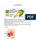 Gastrointestinal System Review