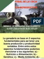 Ciclo Estral de La Vaca