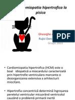 Cardiomiopatie Hipertrofica Felina