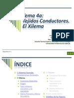 Tema 4a Conductores_Xilema