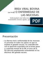 Diarrea Viral Bovina (Enf. de Las Mucosas)
