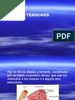 Tendones1