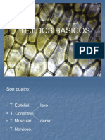 tejidoepitelialclase06-090922180100-phpapp02