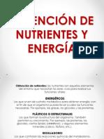 Exposision de Nutrientes