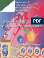 Tema 8 Linfocitos B