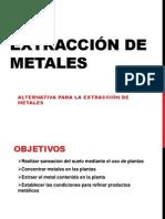 Fito-extracción de metales