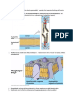 Chapter 7 Cell Membranes