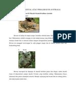 Contoh Hewan Di Wilayah Oriental Peralihan Australia