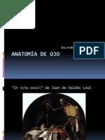 Anatomia de Ojo