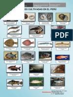 Principales Especies