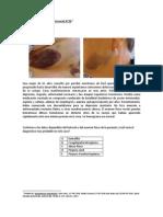 Ejercicio de diagnóstico diferencial N°20 (010313).docx