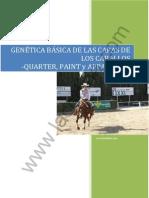 Genetica Basica Dels Colors de Capa Dels Cavalls_Quarter_Paint_i_Appaloosa