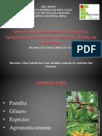 Mancha de Pestalotiopsis em Helicônia.pptx