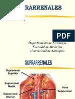 Clase Suprarrenales[1]