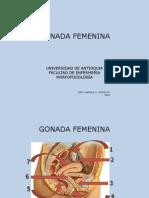 Gonada_Femenina[1]