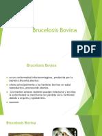 Brucelosis Leucosis Power Zootecnia
