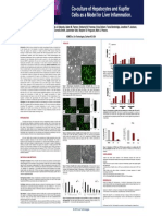 Liver Kupffer Cell Co-culture - Poster