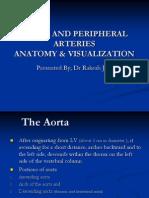 Aorta and Peripheral Arteries Anatomy Visualization