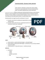 Subiecte Anatomie an II Sem I, Partea I (1)