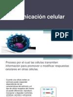 Comunicacion Celular Biologia