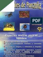 24994471-animales-de-ponzona-130620114340-phpapp01