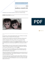 Genetically Modified Monkeys Created With Cut-And-paste DNA