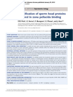 2013 Identify Human Sperm Proteins for Zp Binding
