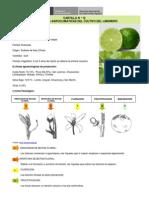 Limon - Cartilla 12 Condiciones Agroclimaticas Del Cultivo Del Limonero