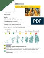 Maiz - Cartilla 03 Condiciones Agroclimaticas Del Cultivo Del Maiz