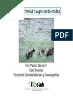 clasecianobacteriasbioingenieria2012