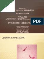 LEISHMANIA MEXICANA