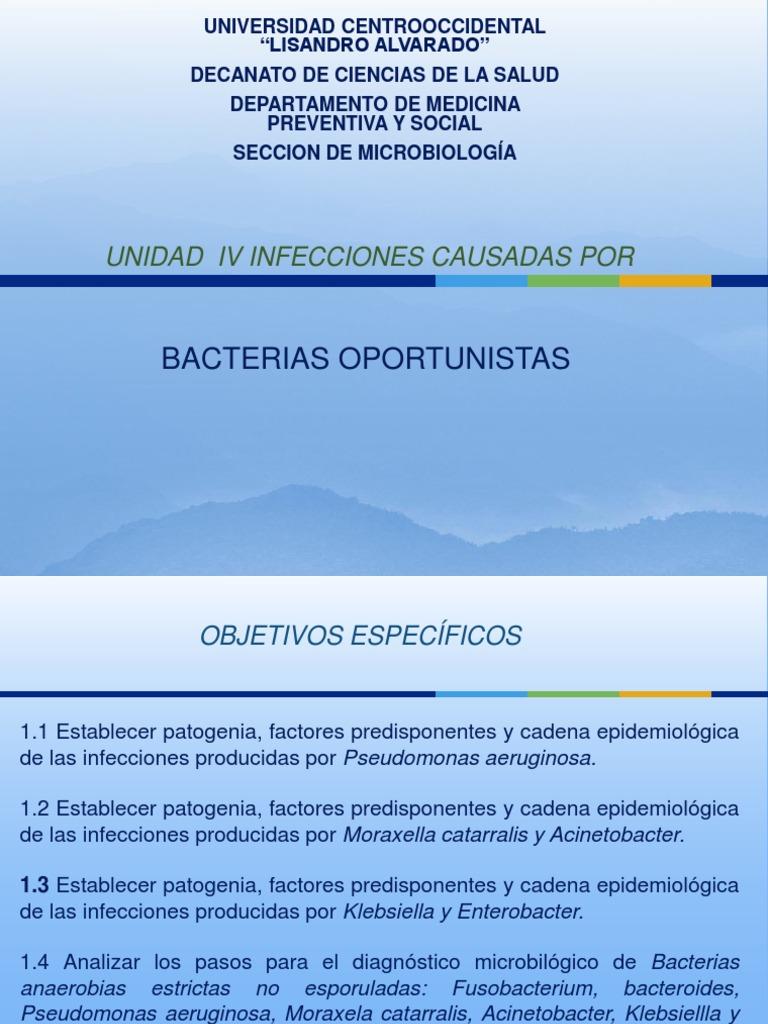 bacterias oportunistas