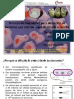 Estandarización de Técnicas de diagnóstico  de bacterias en semilla de papa