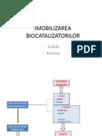 Curs 5_imobilizarea Biocatalizatorilor