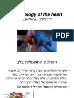 של הלב